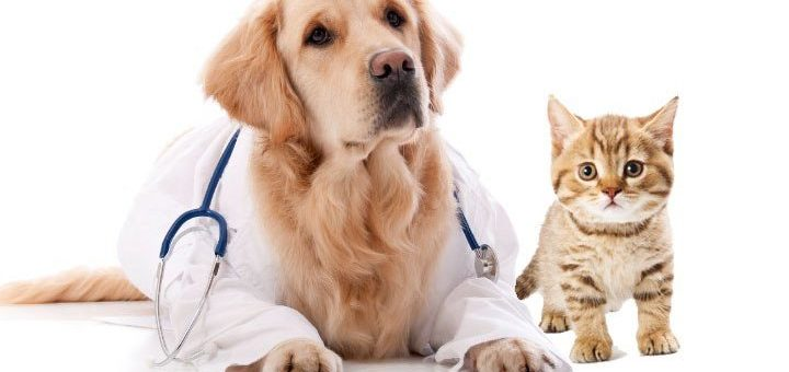 Pet relocation Toronto for the happy reunion