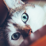 best insurance for your pet