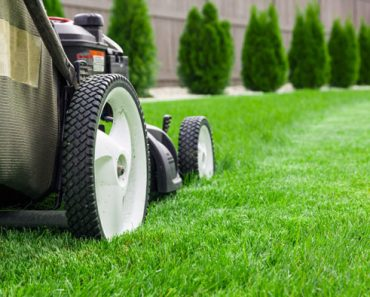 Keys to the Perfect Lawns – Guide To Green Lawns