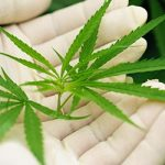 Cannabis and medical benefits