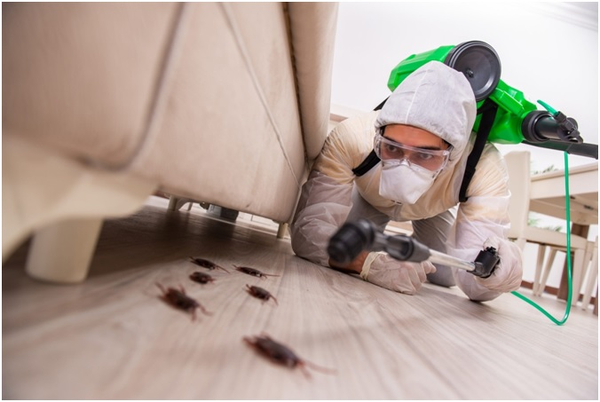 Majority of tips to know while referring to pests control Services Company